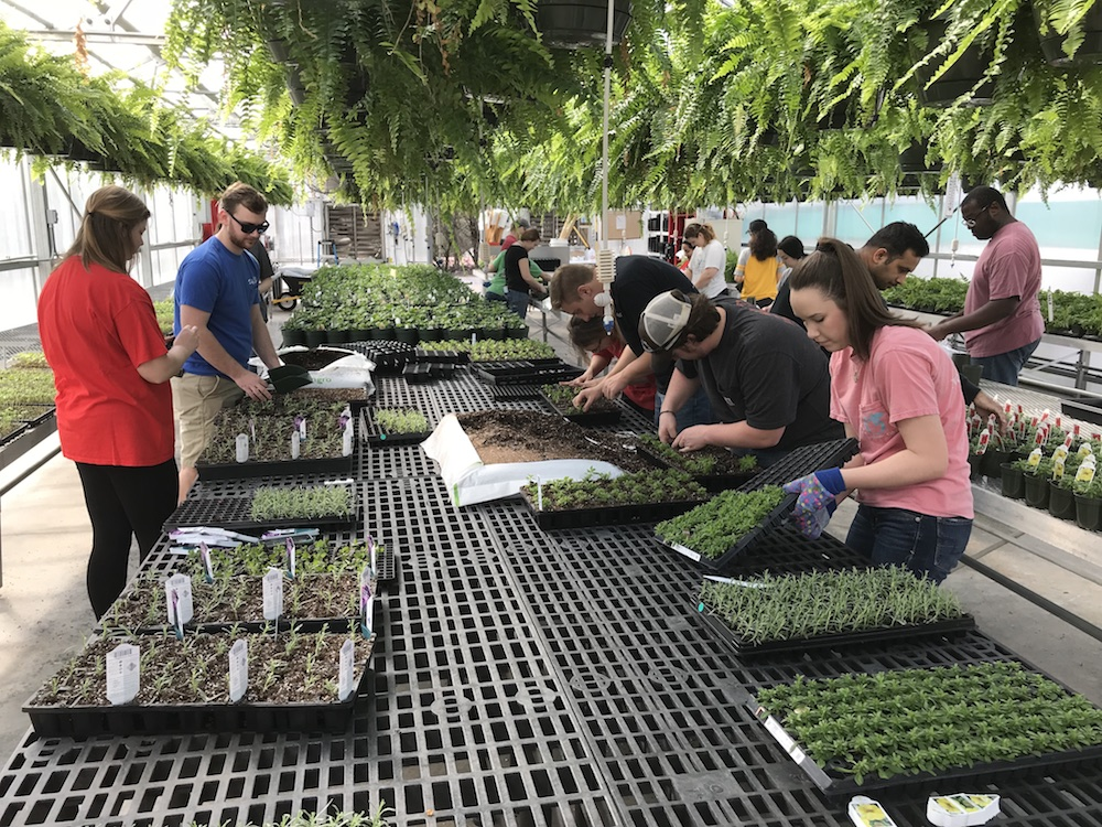 Students and faculty potting up plants for selling.