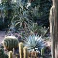 medium_Cactus+Agave Collection.JPG